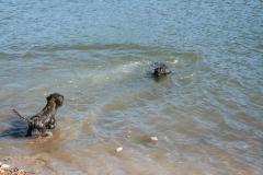 Schwimmen lernen