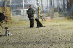 Junghundschule
