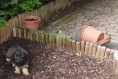 Basina Woche 14 Gartenarchitekt ist fertig
