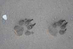 Basina Monat 6 zu Besuch in NL steps in the sand