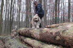 Spaziergang im Esserner Wald
