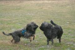 Tinos und Baika