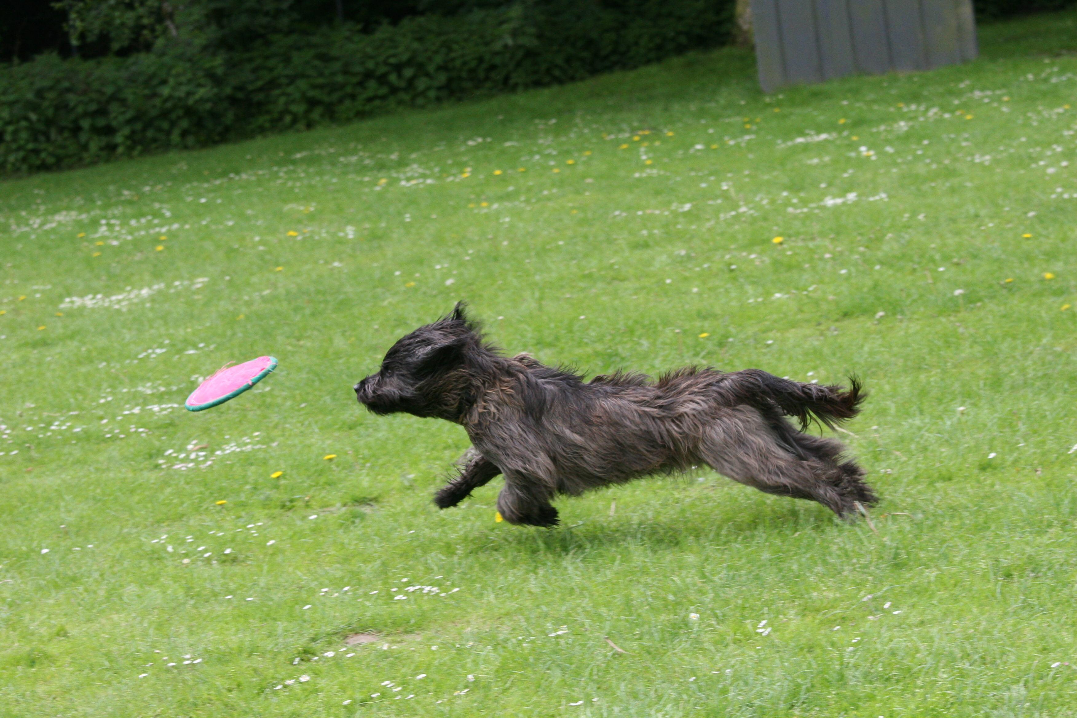 Hobbies Frisbee