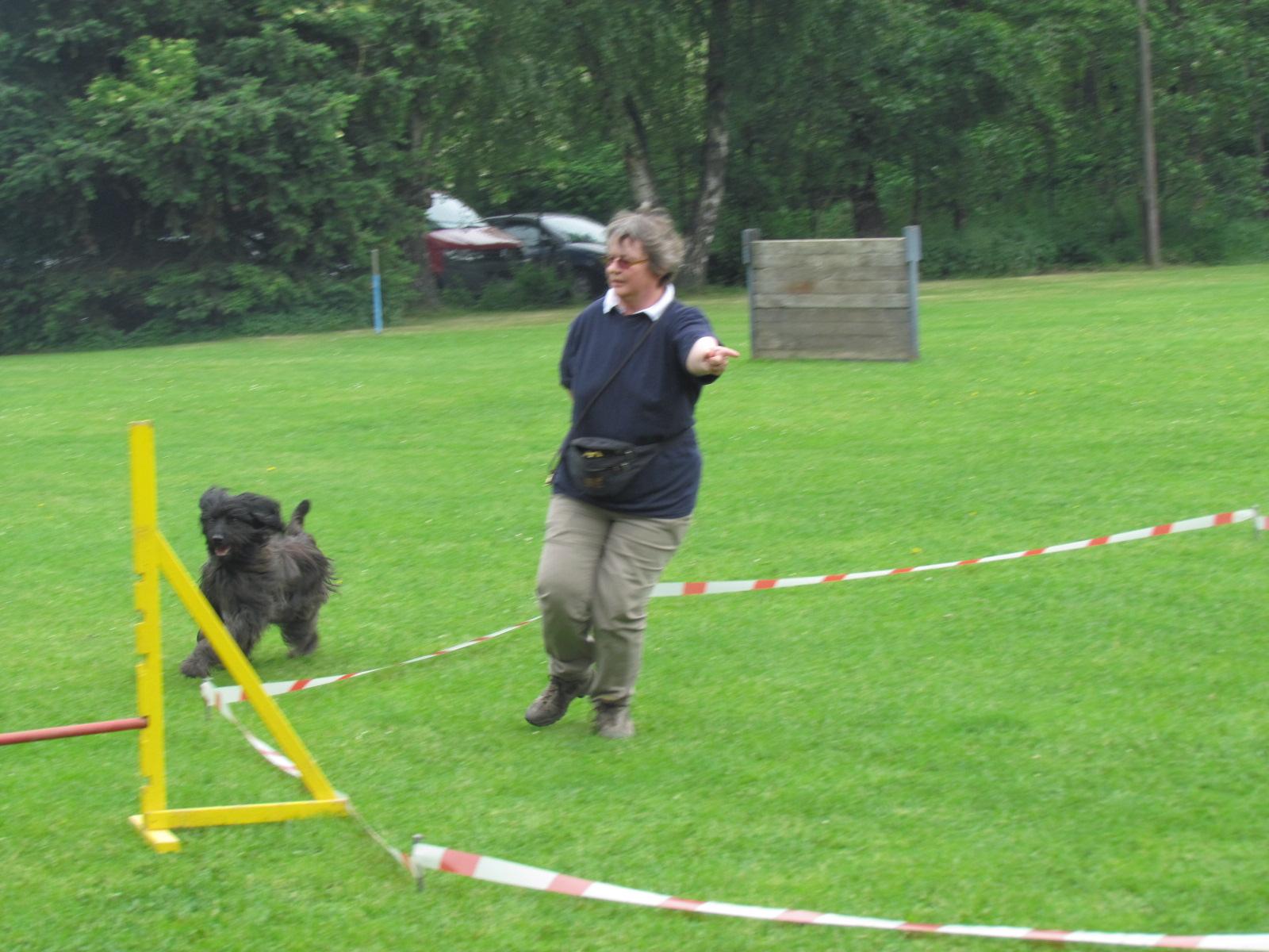 Hundesport im Kreis laufen