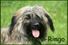Ares-Ringo