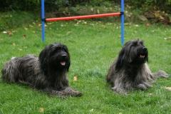 Benga and Maja