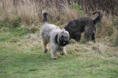 Autumn walk with Benga and Ringo