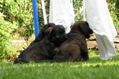 Dad's puppy visit