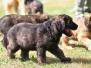 Bilder 2010 Hundeplatz
