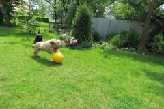 a piglet ball