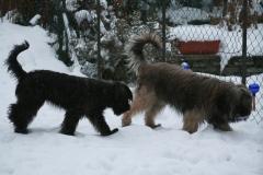 Baika and Ringo