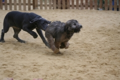 Jades puppy school