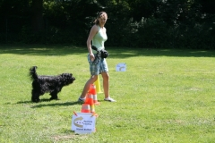 Rally-Obedience