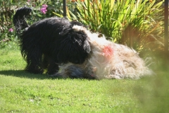 Spring in the garden with Jade and Baika