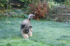 Romping about Jade and Ringo