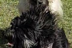 Chewie Frieda Darwin
