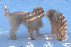Chewbacca at Winter 2021