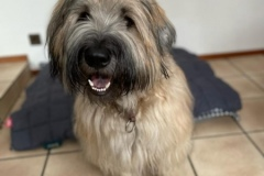 Chewbacca at Home kennel