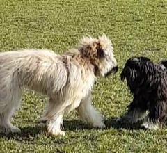 Frieda and Chewie