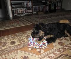 Colina in ihrem neuen Zuhause
