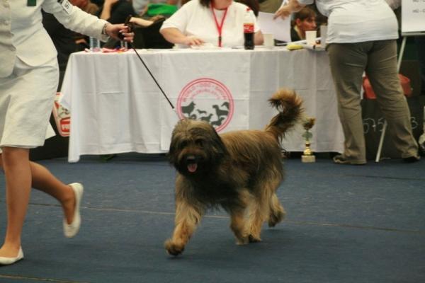Ringo World Dog Show
