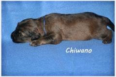 Chiwano