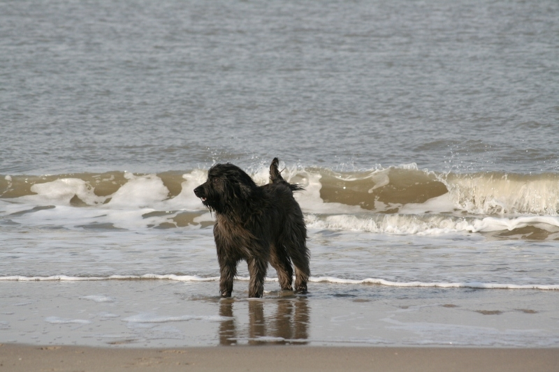 Meer und Wellen_