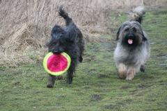 Bengas Frisbee