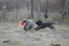 Ringos Frisbee