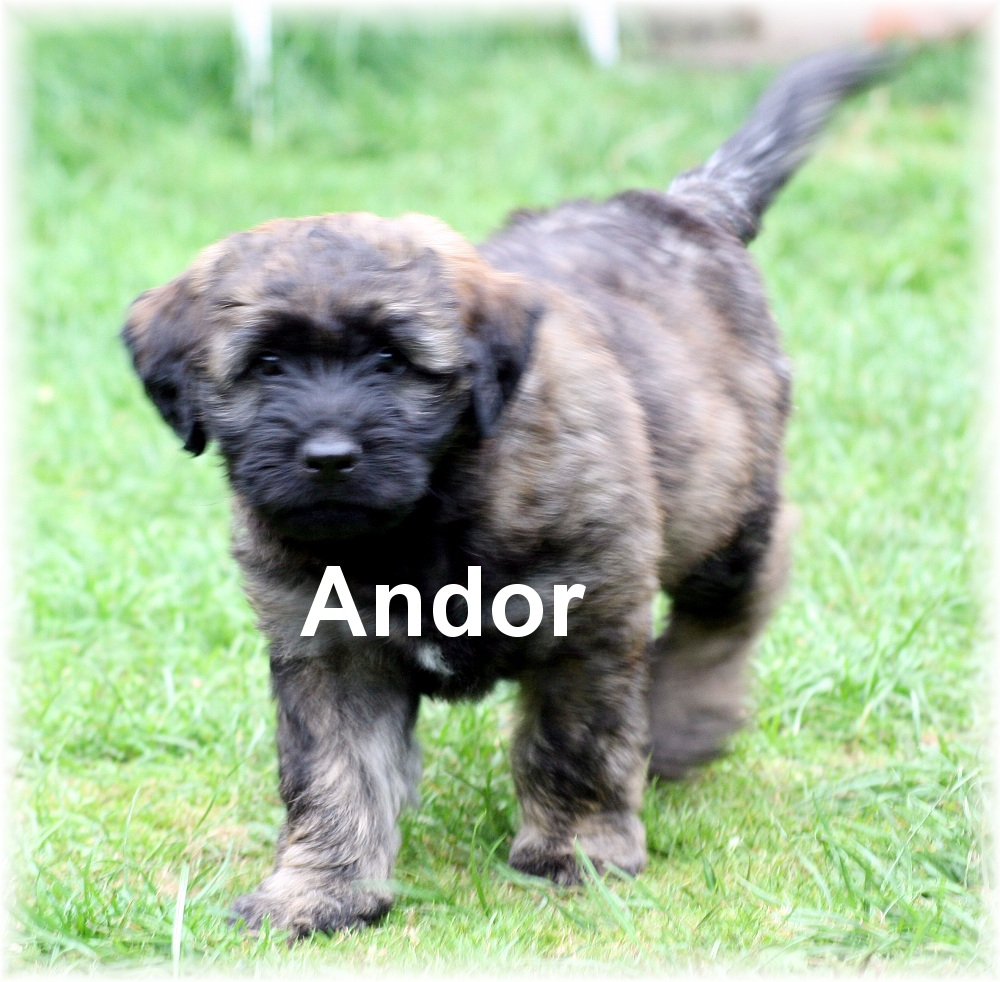 Andor with eight weeks