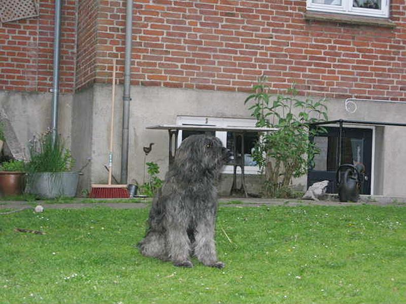 Andor in seinem Garten