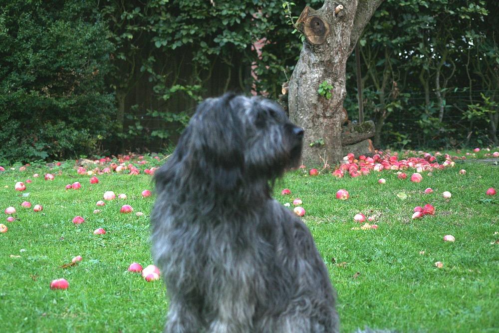 Andor in seinem geliebten Garten