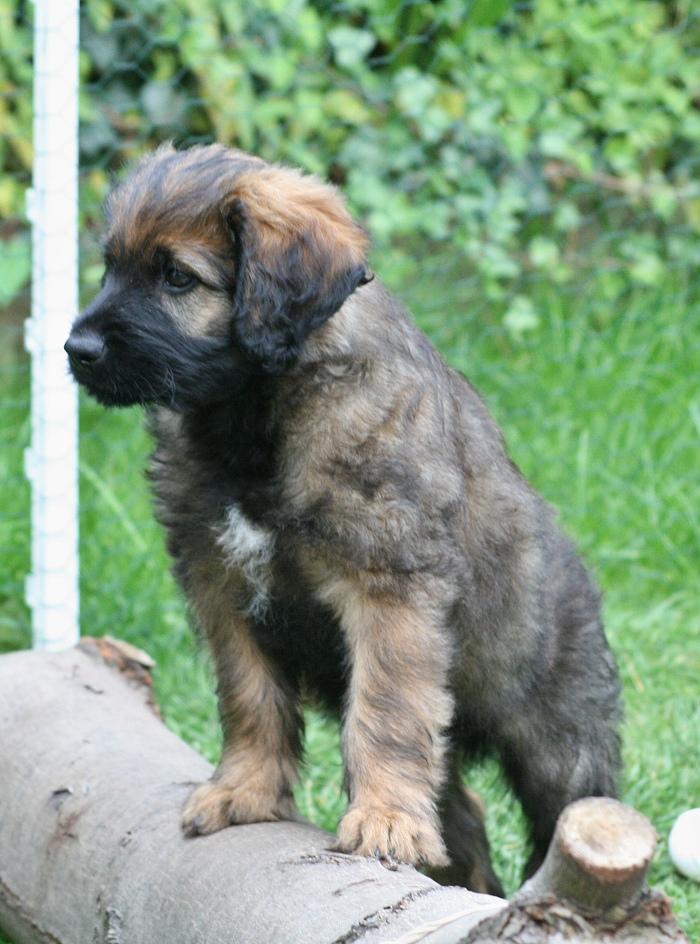 Ares mit 8 Wochen