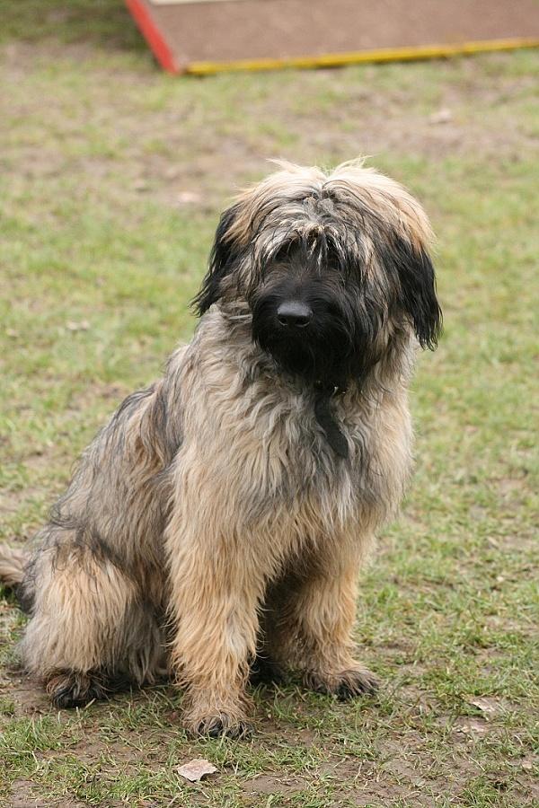 Ares auf dem Hundeplatz
