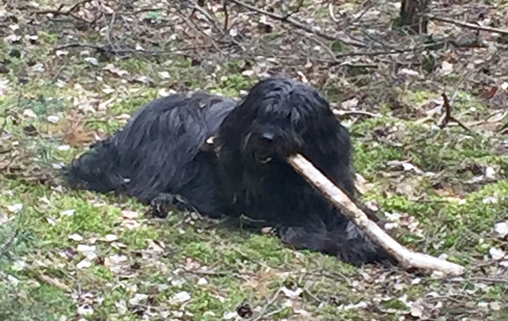 Banu with sticks