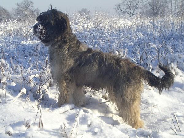 Alessa im Winter 2008