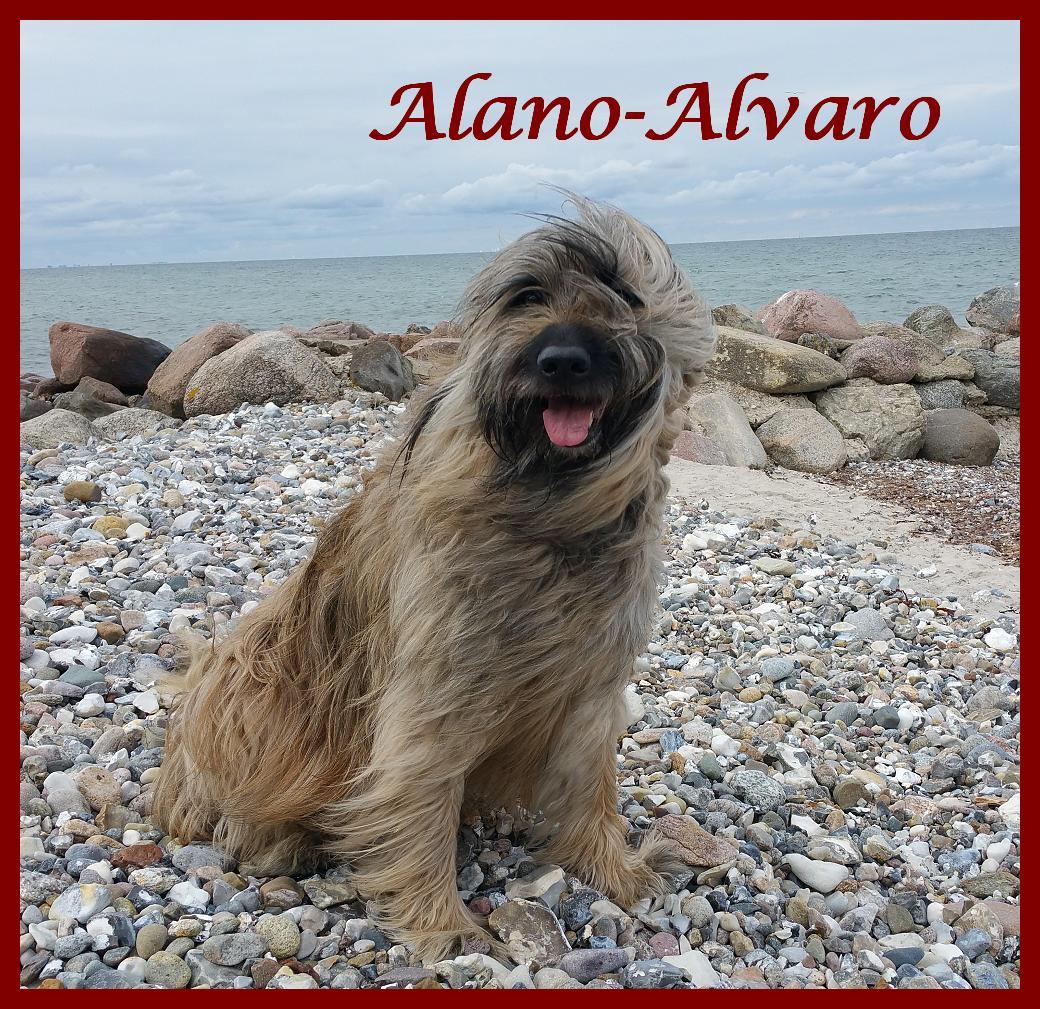 Alano 8 Jahre