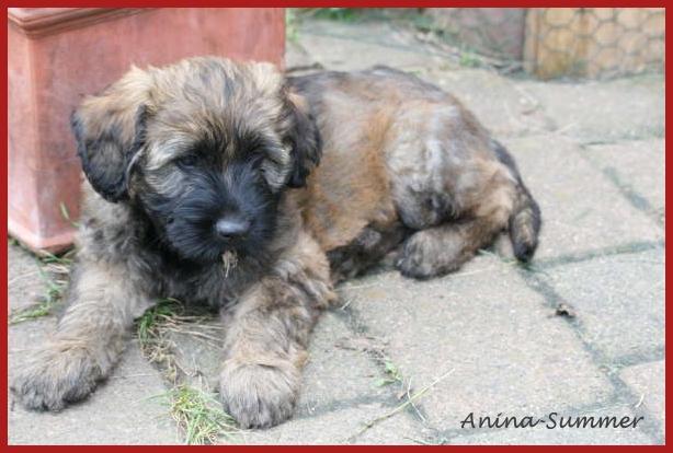 Anina 8 Wochen