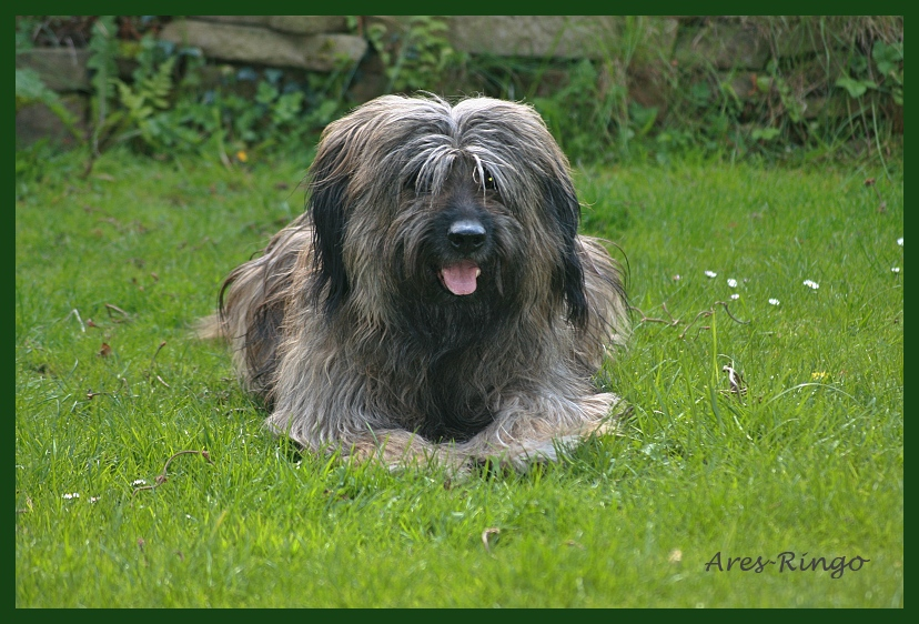 Ares 8 Jahre