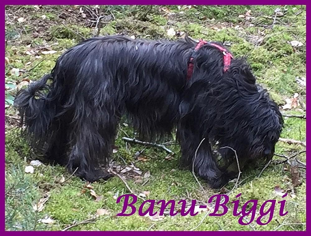 Banu 6 Jahre