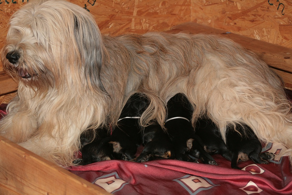 Jade with her puppies