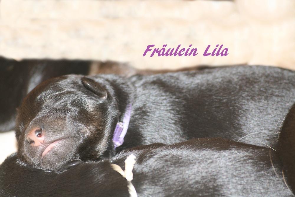 Miss Lila