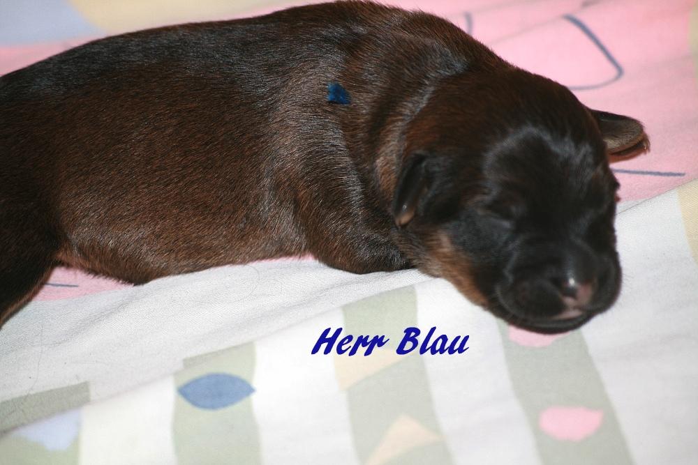 Mister Blau
