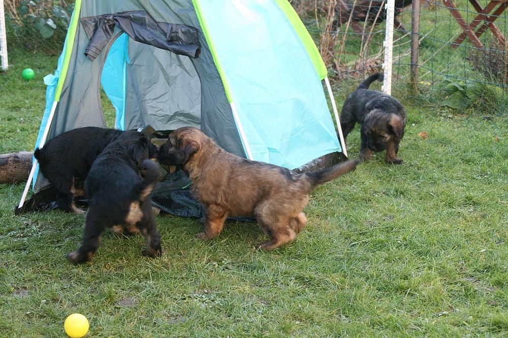 Toben um das Zelt