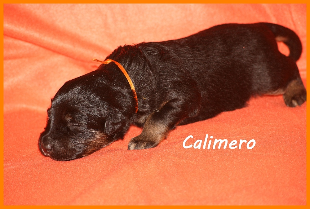 Calimero with 2 weeks