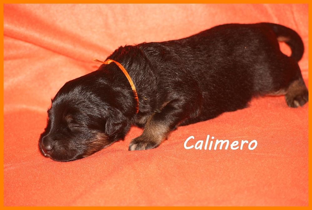 Calimero with 2 weeks