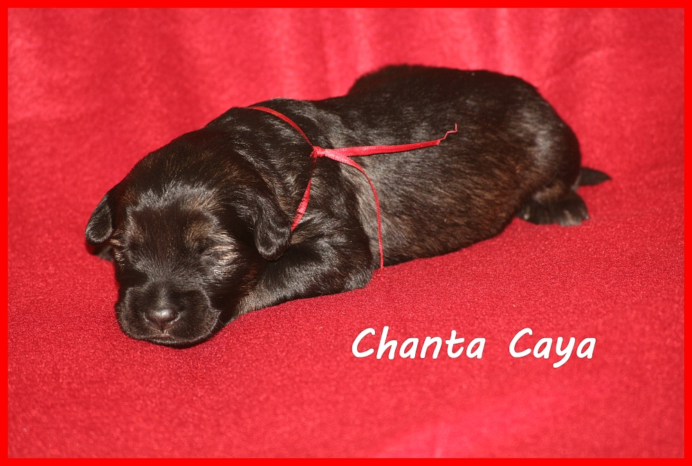 Chanta with 2 weeks