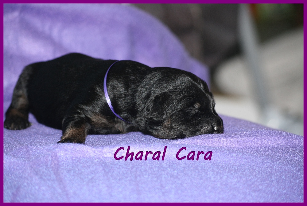 Charal with 2 weeks