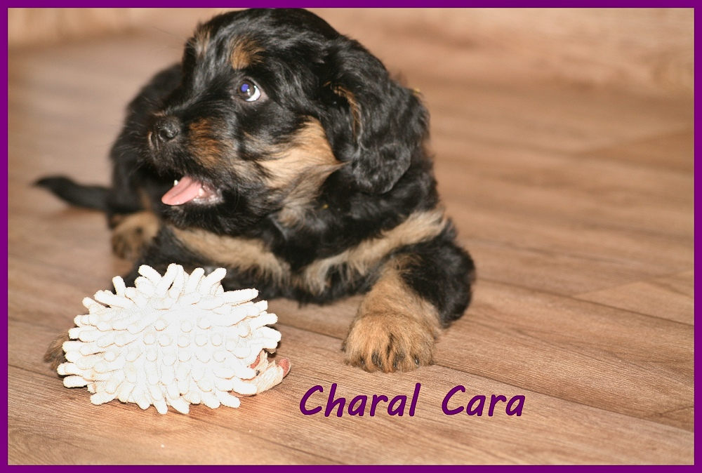 Charal with 8 weeks