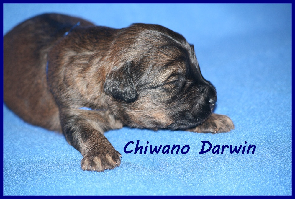Chiwano with 2 weeks